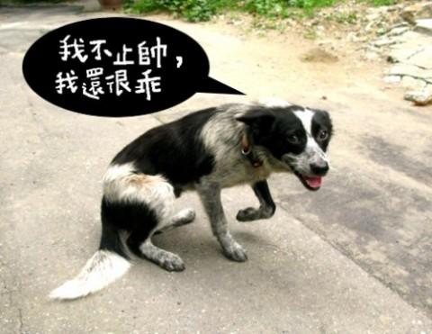 台湾省地图黑白