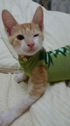 可爱猫咪手机壁纸图片白底