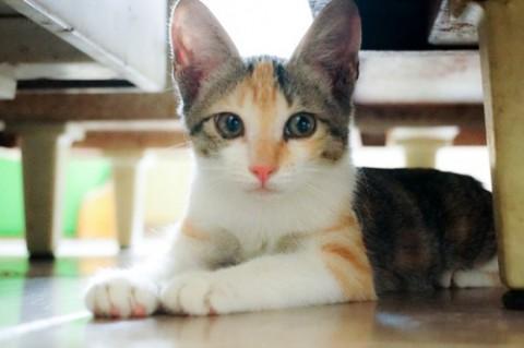 壁纸 动物 猫 猫咪 小猫 桌面 480_319