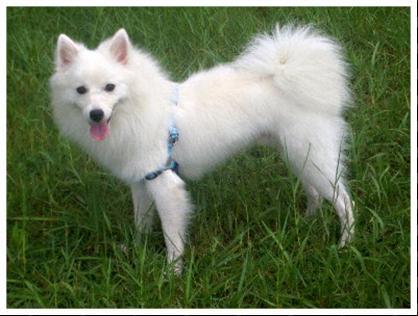 我的狗狗是在1 2日走失的,请大家帮帮我 找寻他